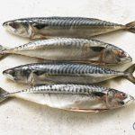 makreel - basishulp