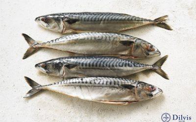 Gekruide makreel met taugé, mais en aardappelpuree